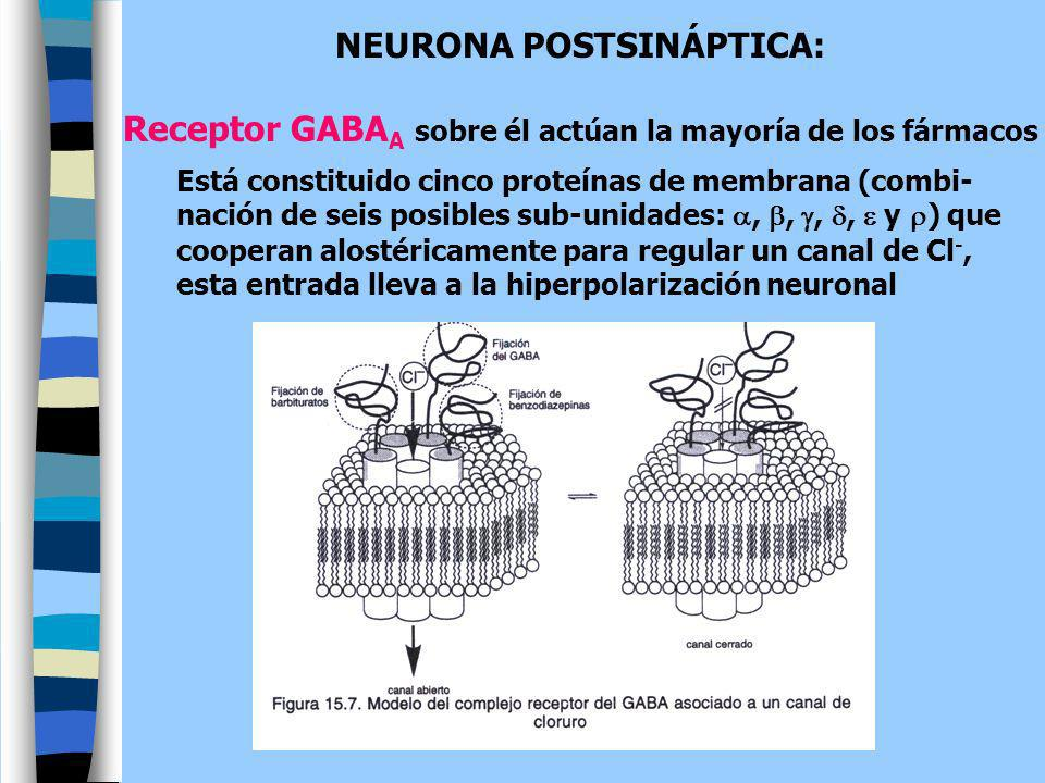 NEURONA POSTSINÁPTICA: Receptor GABA A sobre él actúan la mayoría de los fármacos Está constituido cinco proteínas de membrana (combi- nación de seis