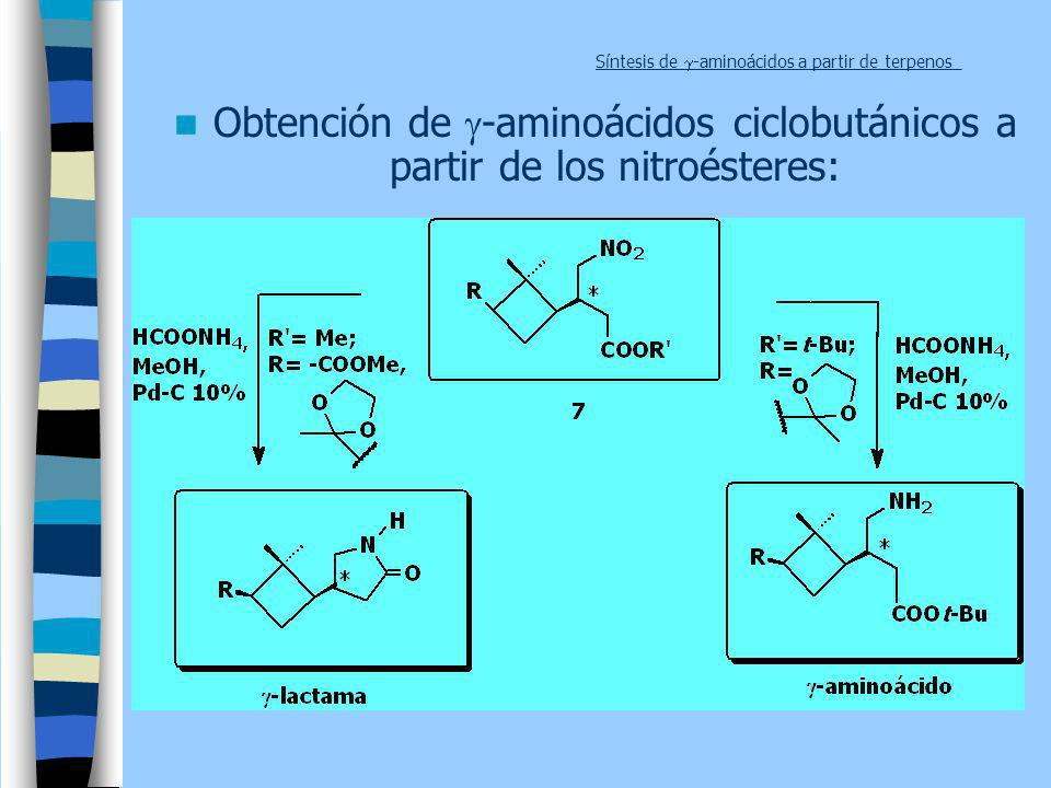 Síntesis de -aminoácidos a partir de terpenos_ Obtención de -aminoácidos ciclobutánicos a partir de los nitroésteres:
