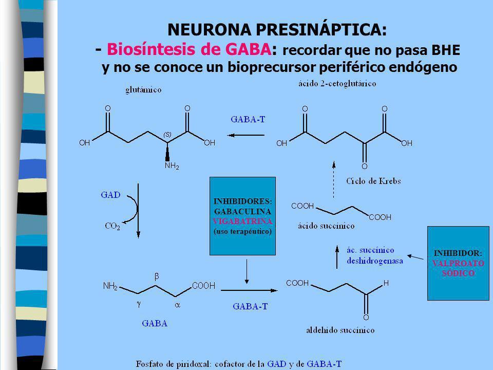 NEURONA PRESINÁPTICA: - Biosíntesis de GABA: recordar que no pasa BHE y no se conoce un bioprecursor periférico endógeno INHIBIDOR: VALPROATO SÓDICO I