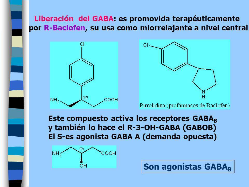 Liberación del GABA: es promovida terapéuticamente por R-Baclofen, su usa como miorrelajante a nivel central Este compuesto activa los receptores GABA