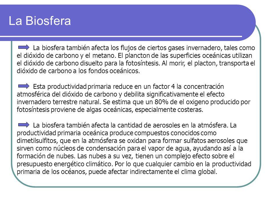 La Biosfera La biosfera también afecta los flujos de ciertos gases invernadero, tales como el dióxido de carbono y el metano. El plancton de las super