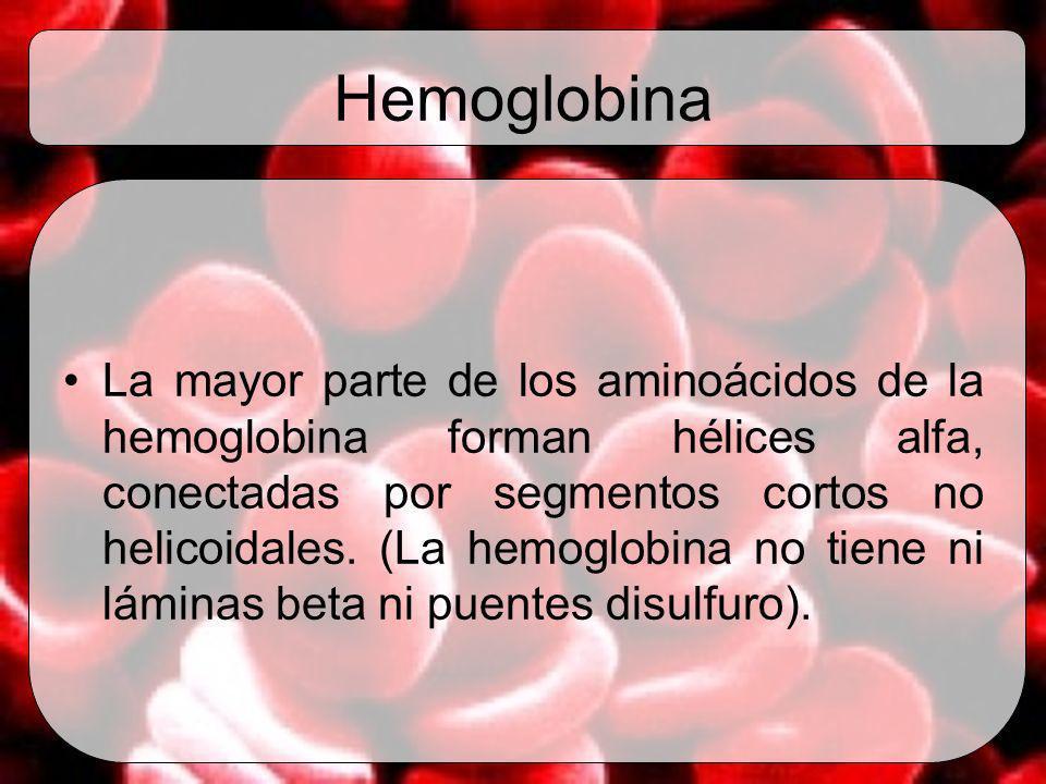 Hemoglobina La mayor parte de los aminoácidos de la hemoglobina forman hélices alfa, conectadas por segmentos cortos no helicoidales. (La hemoglobina