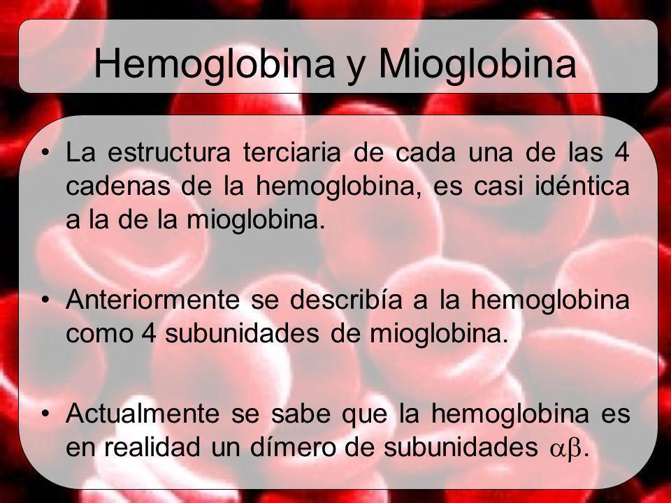Hemoglobina y Mioglobina La estructura terciaria de cada una de las 4 cadenas de la hemoglobina, es casi idéntica a la de la mioglobina. Anteriormente