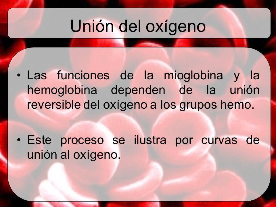 Unión del oxígeno Las funciones de la mioglobina y la hemoglobina dependen de la unión reversible del oxígeno a los grupos hemo. Este proceso se ilust