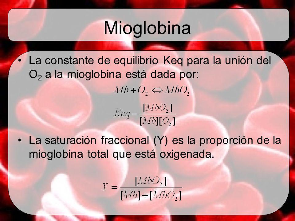 Mioglobina La constante de equilibrio Keq para la unión del O 2 a la mioglobina está dada por: La saturación fraccional (Y) es la proporción de la mio
