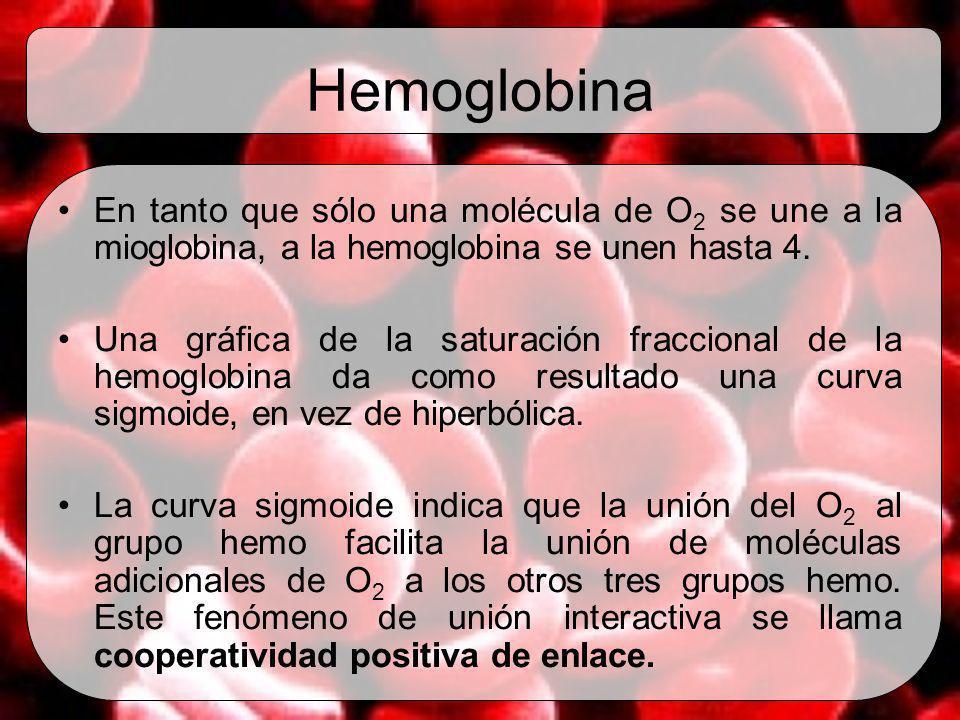 Hemoglobina En tanto que sólo una molécula de O 2 se une a la mioglobina, a la hemoglobina se unen hasta 4. Una gráfica de la saturación fraccional de