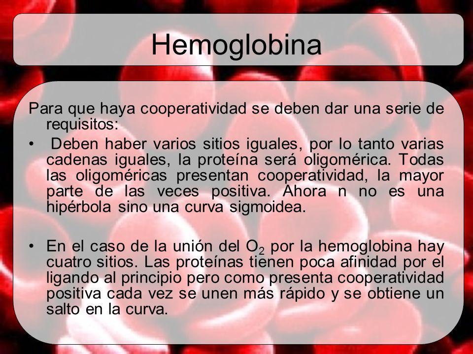 Hemoglobina Para que haya cooperatividad se deben dar una serie de requisitos: Deben haber varios sitios iguales, por lo tanto varias cadenas iguales,