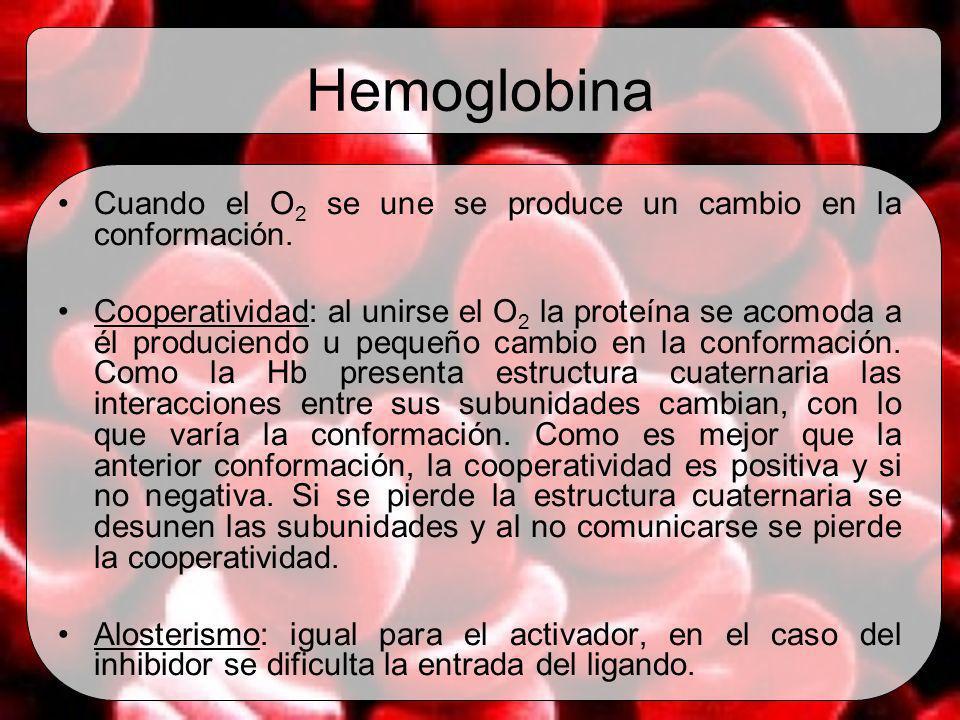 Hemoglobina Cuando el O 2 se une se produce un cambio en la conformación. Cooperatividad: al unirse el O 2 la proteína se acomoda a él produciendo u p