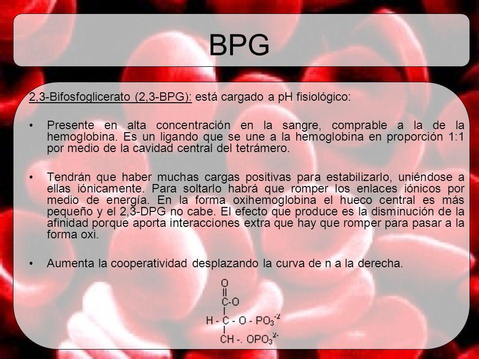 BPG 2,3-Bifosfoglicerato (2,3-BPG): está cargado a pH fisiológico: Presente en alta concentración en la sangre, comprable a la de la hemoglobina. Es u
