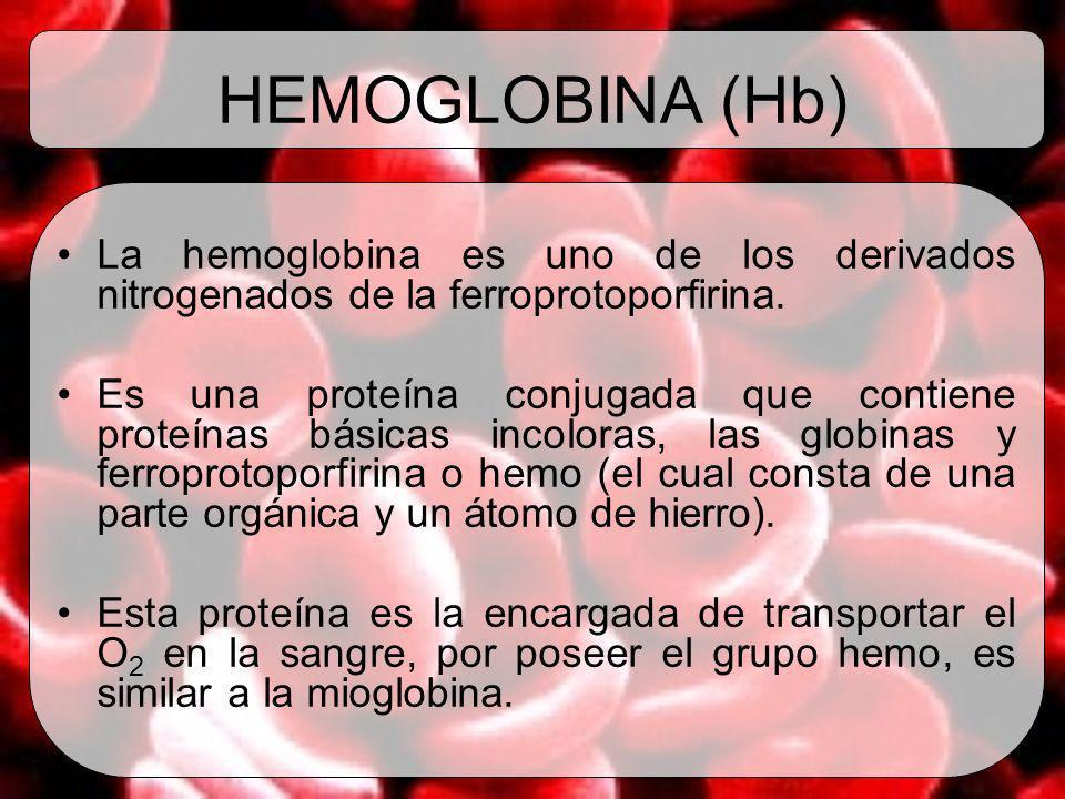 HEMOGLOBINA (Hb) La hemoglobina es uno de los derivados nitrogenados de la ferroprotoporfirina. Es una proteína conjugada que contiene proteínas básic