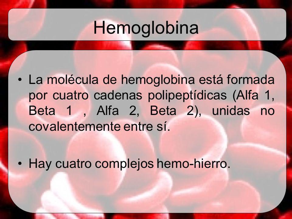 Hemoglobina La molécula de hemoglobina está formada por cuatro cadenas polipeptídicas (Alfa 1, Beta 1, Alfa 2, Beta 2), unidas no covalentemente entre