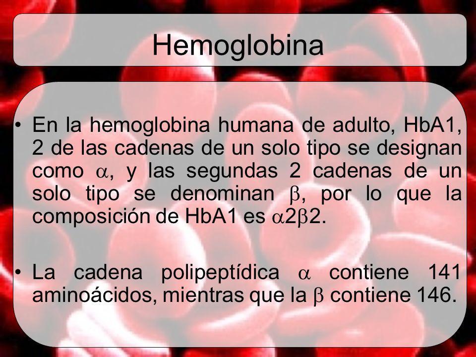 Hemoglobina En la hemoglobina humana de adulto, HbA1, 2 de las cadenas de un solo tipo se designan como, y las segundas 2 cadenas de un solo tipo se d