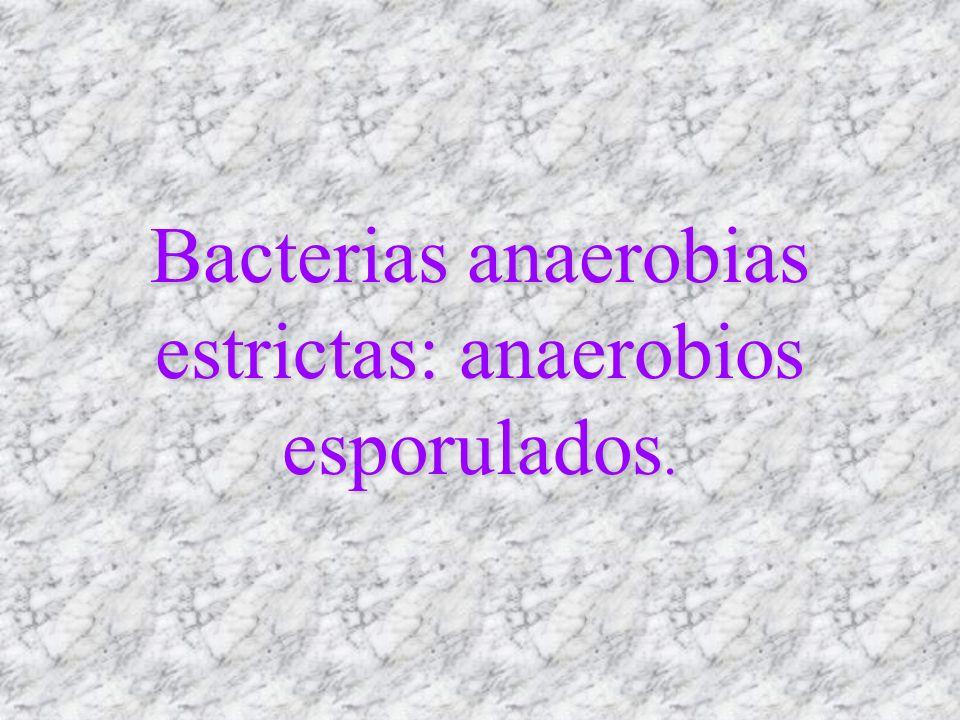 Bacterias anaerobias estrictas: anaerobios esporulados.