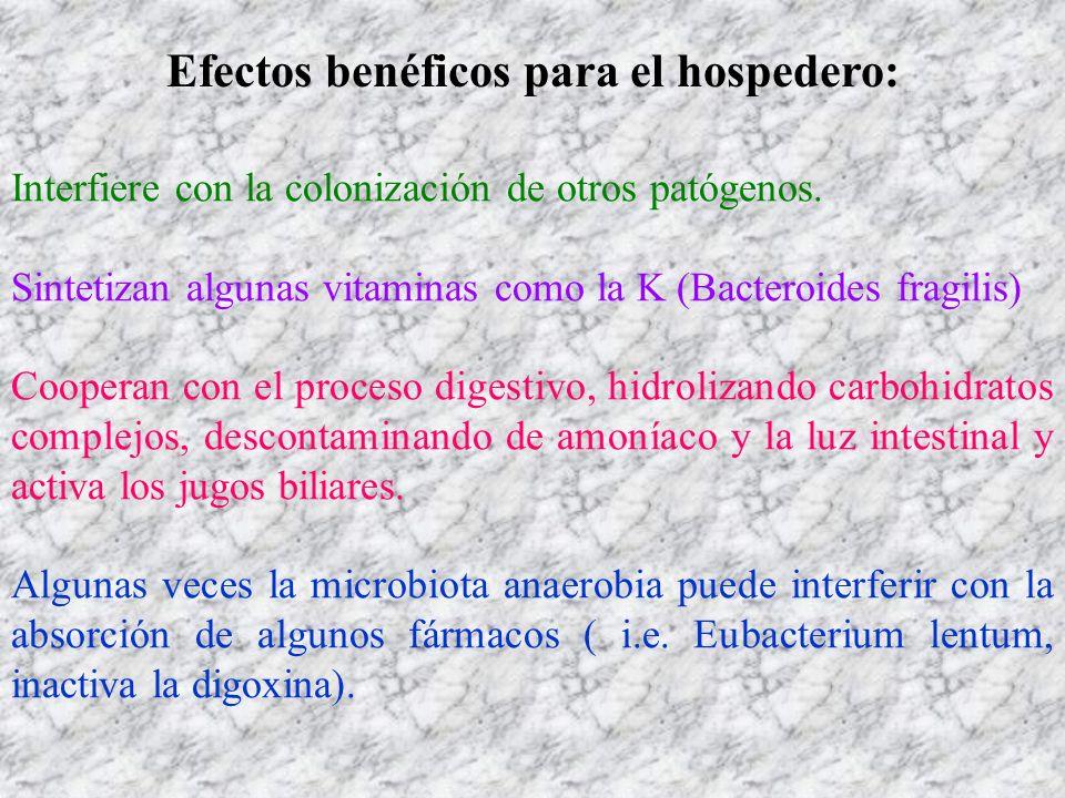 Efectos benéficos para el hospedero: Interfiere con la colonización de otros patógenos. Sintetizan algunas vitaminas como la K (Bacteroides fragilis)