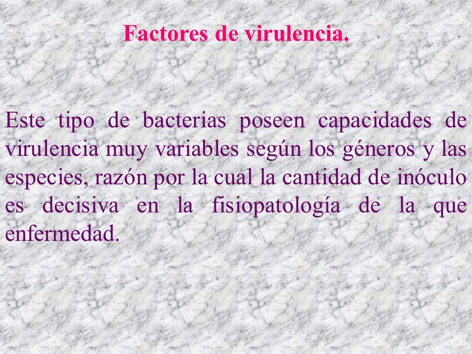 Factores de virulencia. Este tipo de bacterias poseen capacidades de virulencia muy variables según los géneros y las especies, razón por la cual la c