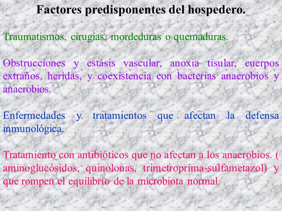 Factores predisponentes del hospedero. Traumatismos, cirugías, mordeduras o quemaduras. Obstrucciones y estásis vascular, anoxia tisular, cuerpos extr