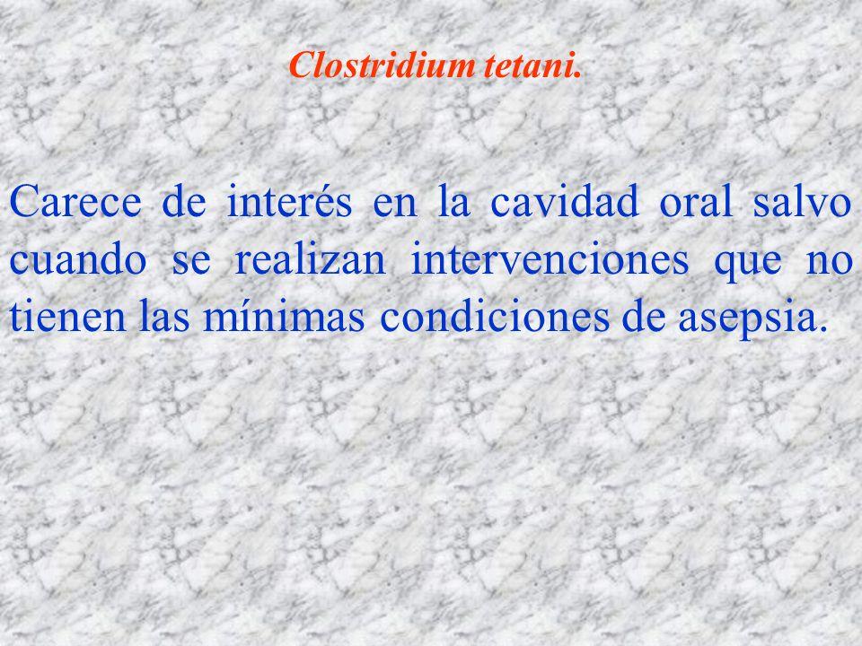 Clostridium tetani. Carece de interés en la cavidad oral salvo cuando se realizan intervenciones que no tienen las mínimas condiciones de asepsia.