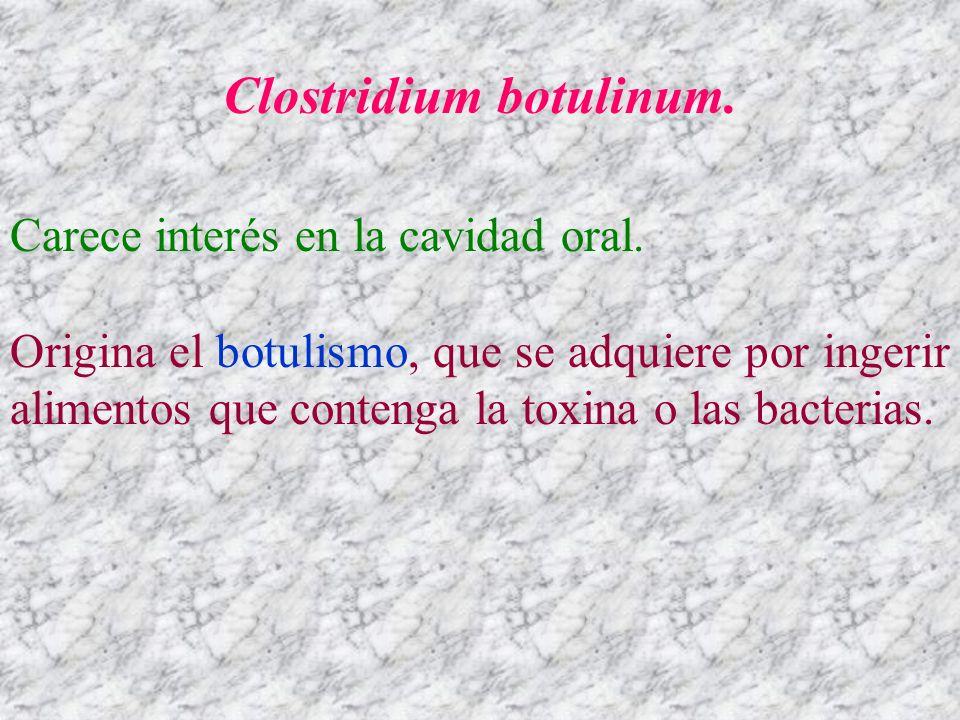 Clostridium botulinum. Carece interés en la cavidad oral. Origina el botulismo, que se adquiere por ingerir alimentos que contenga la toxina o las bac