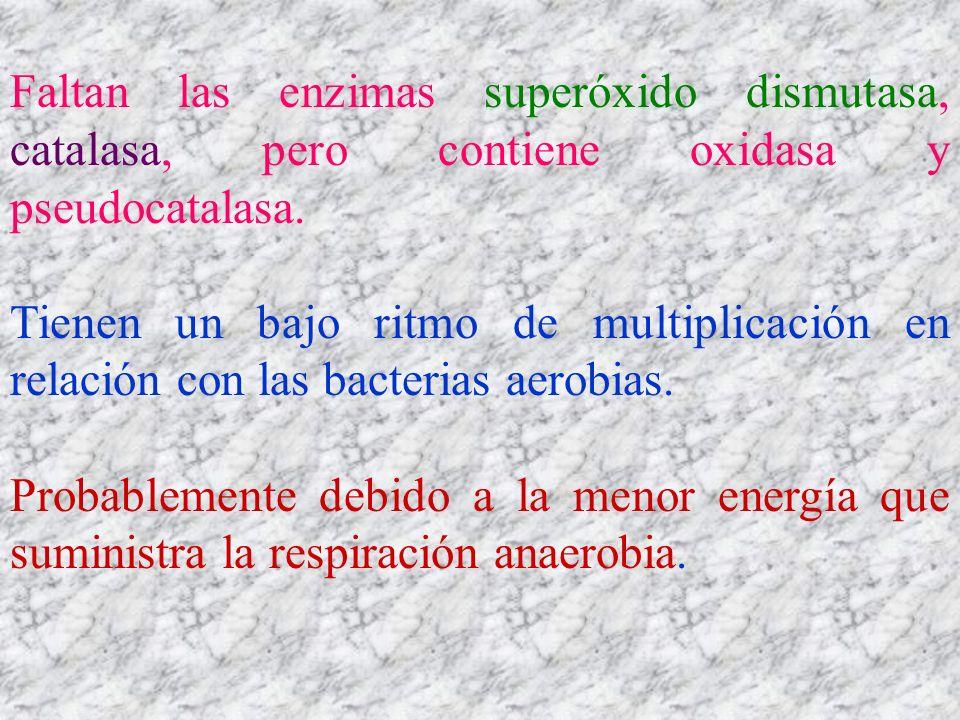 Faltan las enzimas superóxido dismutasa, catalasa, pero contiene oxidasa y pseudocatalasa. Tienen un bajo ritmo de multiplicación en relación con las