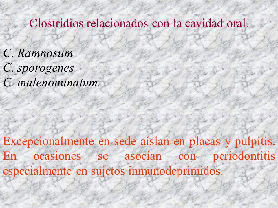 Clostridios relacionados con la cavidad oral. C. Ramnosum C. sporogenes C. malenominatum. Excepcionalmente en sede aíslan en placas y pulpitis. En oca