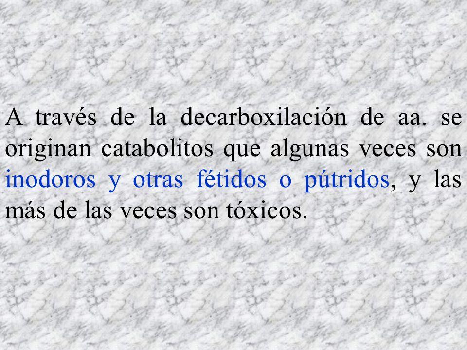 A través de la decarboxilación de aa. se originan catabolitos que algunas veces son inodoros y otras fétidos o pútridos, y las más de las veces son tó