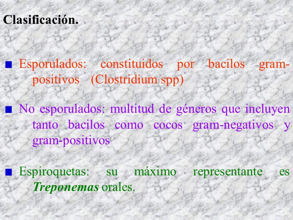 Clasificación. Esporulados: constituidos por bacilos gram- positivos (Clostridium spp) No esporulados: multitud de géneros que incluyen tanto bacilos