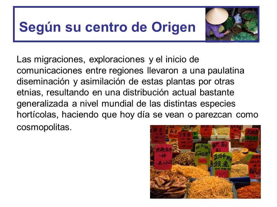 La Hortaliza de América Almolonga, Quetzaltenango 80 por ciento de los 15 mil 126 habitantes tiene al menos media cuerda de tierra dedicada a las hortalizas.