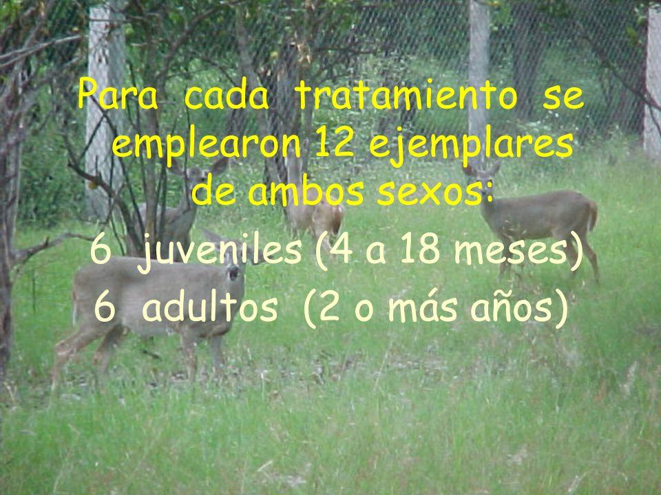 Para cada tratamiento se emplearon 12 ejemplares de ambos sexos: 6 juveniles (4 a 18 meses) 6 adultos (2 o más años)