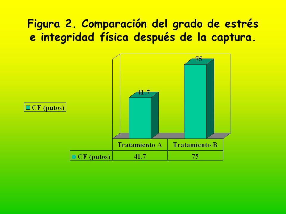 Figura 2. Comparación del grado de estrés e integridad física después de la captura.