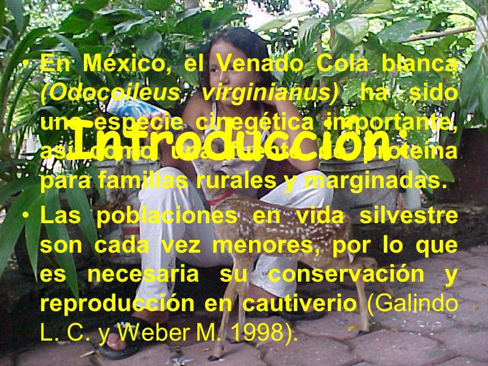 En México, el Venado Cola blanca (Odocoileus virginianus) ha sido una especie cinegética importante, así como una fuente de proteína para familias rurales y marginadas.