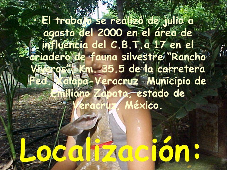 Localización: El trabajo se realizó de julio a agosto del 2000 en el área de influencia del C.B.T.a 17 en el criadero de fauna silvestre Rancho Viveros, Km.