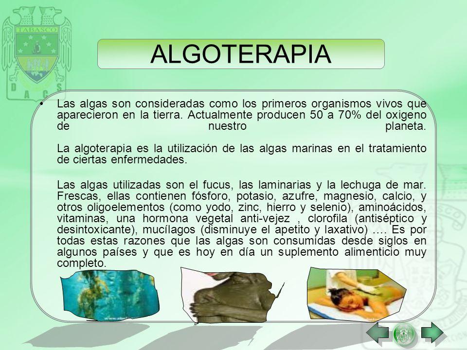 Las algas son consideradas como los primeros organismos vivos que aparecieron en la tierra.