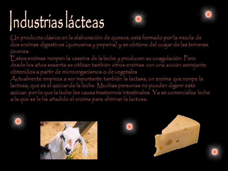 Un producto clásico en la elaboración de quesos, está formado por la mezcla de dos enzimas digestivos (quimosina y pepsina) y se obtiene del cuajar de