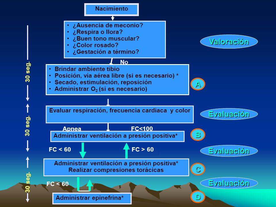 Valoración Evaluación Evaluación Evaluación A B C D Brindar ambiente tibio Posición, vía aérea libre (si es necesario) * Secado, estimulación, reposic