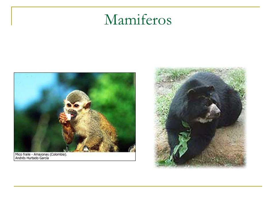 LA PERDIDA DE BIODIVERSIDAD Cuáles son las causas directas de la pérdida de la Biodiversidad.