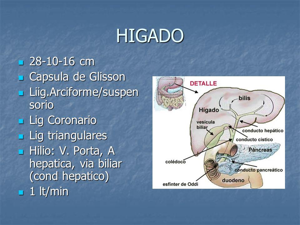 HIGADO 28-10-16 cm 28-10-16 cm Capsula de Glisson Capsula de Glisson Liig.Arciforme/suspen sorio Liig.Arciforme/suspen sorio Lig Coronario Lig Coronar