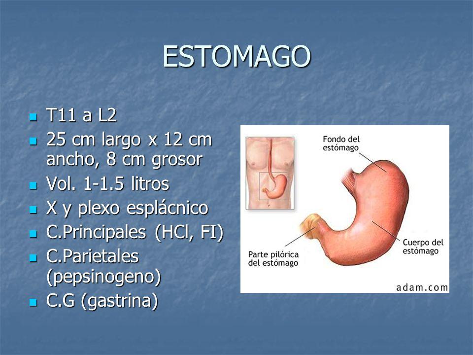 JUGO GASTRICO Digestión de proteínas Digestión de proteínas 2500 ml diariopH 1.5 2500 ml diariopH 1.5 Inorgánico: HCl, H, Na, Ca, K, Cl.
