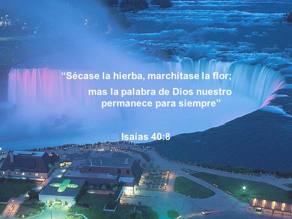 Lámpara es a mis pies tu palabra, Y lumbrera a mi camino. Salmo 119:105