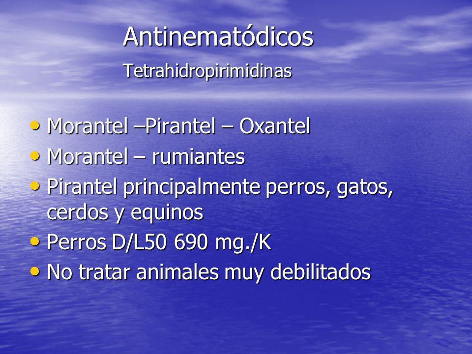 Antinematódicos Tetrahidropirimidinas Morantel –Pirantel – Oxantel Morantel –Pirantel – Oxantel Morantel – rumiantes Morantel – rumiantes Pirantel pri