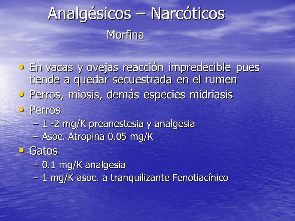Analgésicos – Narcóticos Morfina En vacas y ovejas reacción impredecible pues tiende a quedar secuestrada en el rumen En vacas y ovejas reacción impre