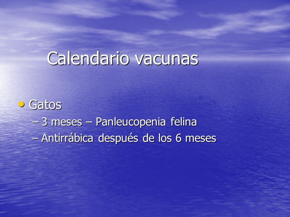 Calendario vacunas Gatos Gatos –3 meses – Panleucopenia felina –Antirrábica después de los 6 meses