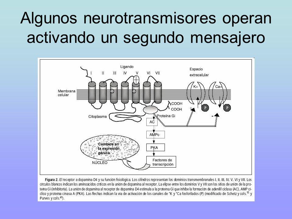 Algunos neurotransmisores operan activando un segundo mensajero