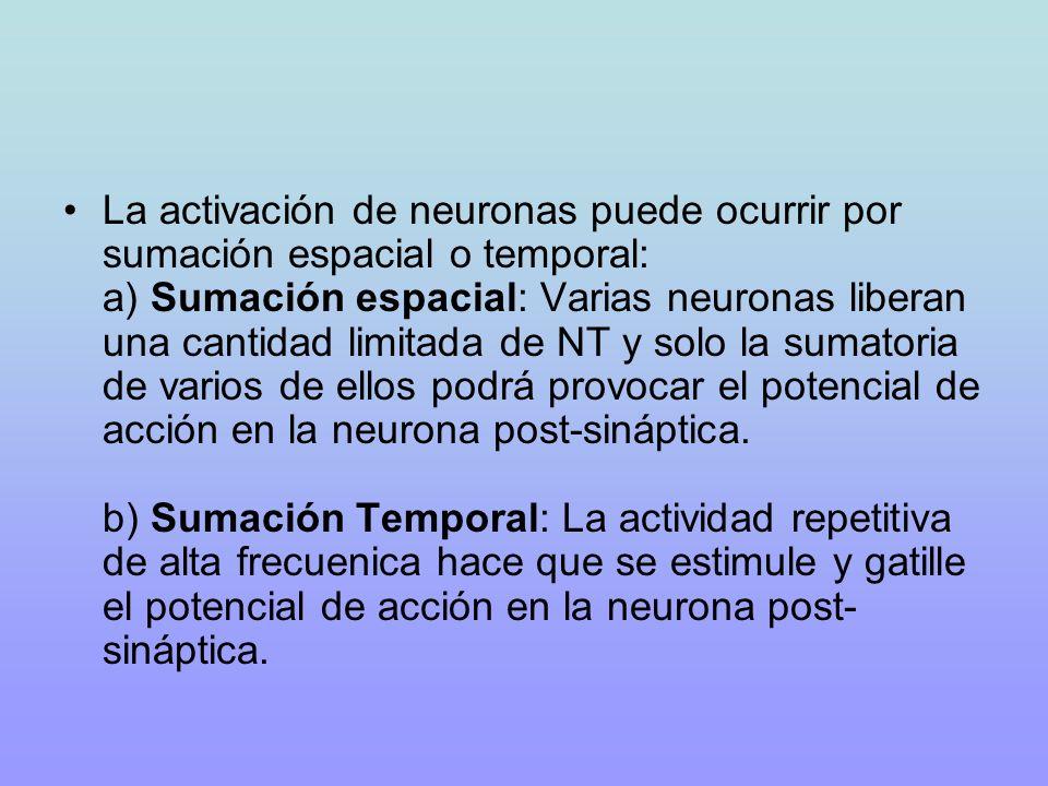 La activación de neuronas puede ocurrir por sumación espacial o temporal: a) Sumación espacial: Varias neuronas liberan una cantidad limitada de NT y