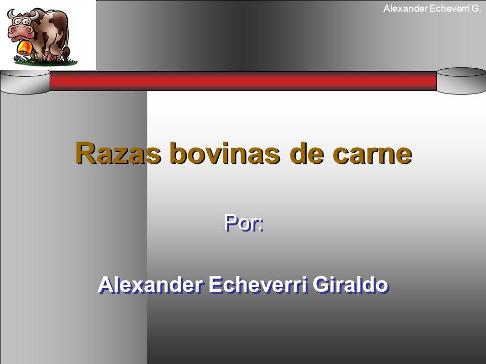 Alexander Echeverri G. Razas bovinas de carne Por: Alexander Echeverri Giraldo Por: Alexander Echeverri Giraldo