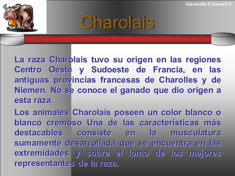 Alexander Echeverri G. Charolais La raza Charolais tuvo su origen en las regiones Centro Oeste y Sudoeste de Francia, en las antiguas provincias franc