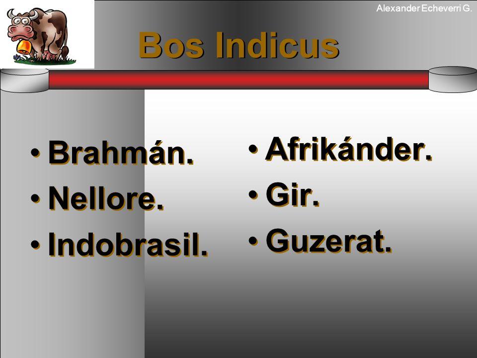 Alexander Echeverri G. Bos Indicus Brahmán. Nellore. Indobrasil. Brahmán. Nellore. Indobrasil. Afrikánder. Gir. Guzerat. Afrikánder. Gir. Guzerat.