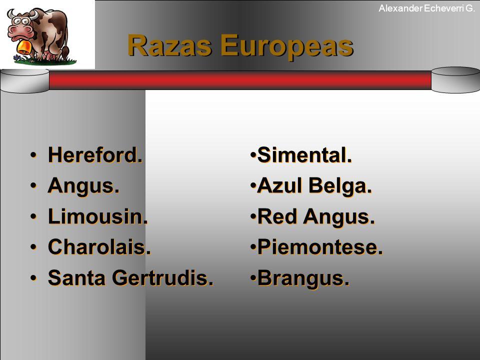 Alexander Echeverri G. Razas Europeas Hereford. Angus. Limousin. Charolais. Santa Gertrudis. Hereford. Angus. Limousin. Charolais. Santa Gertrudis. Si