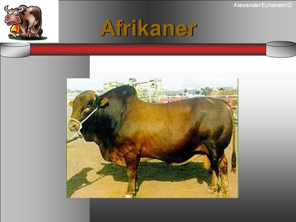 Alexander Echeverri G. Afrikaner