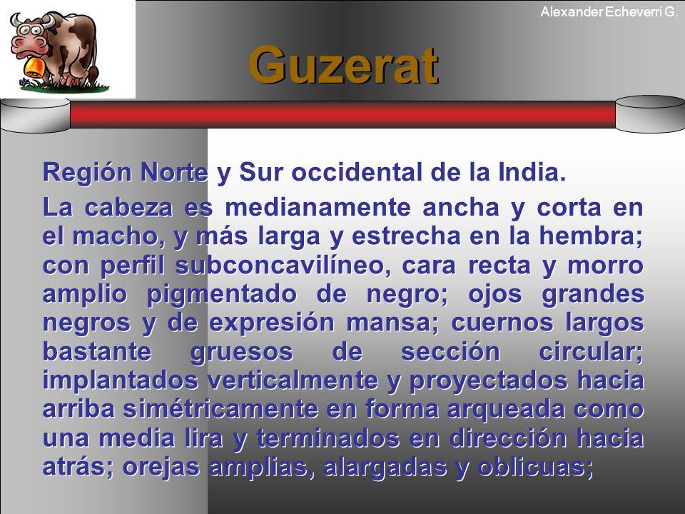 Alexander Echeverri G. Guzerat Región Norte y Sur occidental de la India. La cabeza es medianamente ancha y corta en el macho, y más larga y estrecha