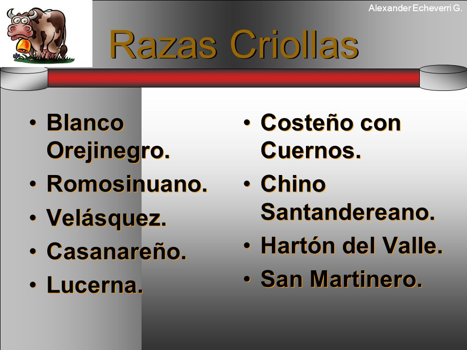 Alexander Echeverri G. Razas Criollas Blanco Orejinegro. Romosinuano. Velásquez. Casanareño. Lucerna. Blanco Orejinegro. Romosinuano. Velásquez. Casan